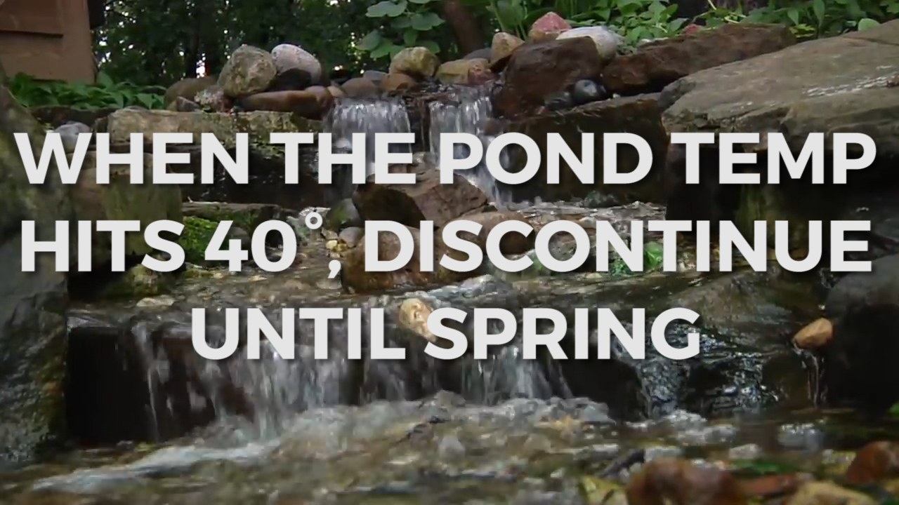 Clean your pond