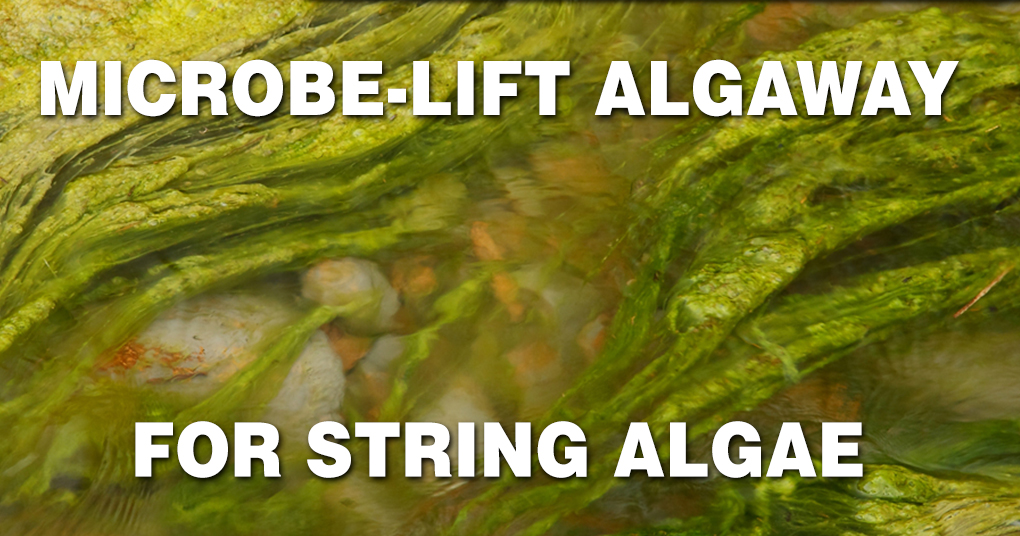Microbe-Lift Algaway For String Algae