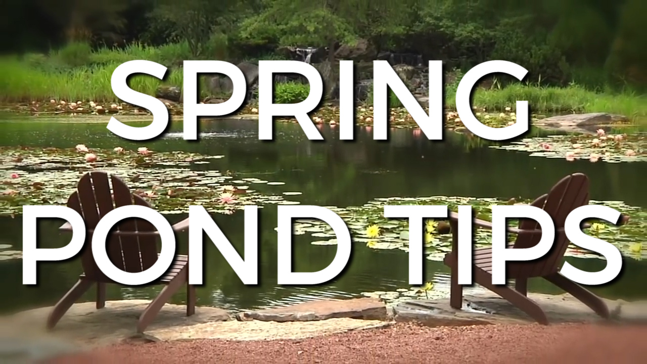 TOP 3 SPRING START UP TIPS for your POND