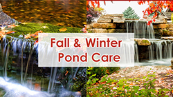 Fall and Winter Pond Care