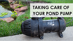 Cleaning & Maintaining Your Pump