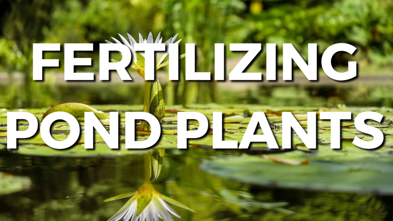 Fertilizing Pond Plants