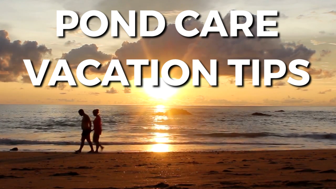 Pond Care Vacation Tips