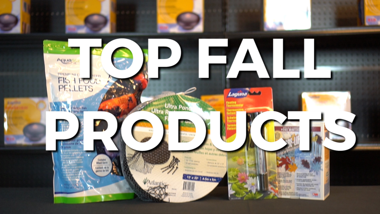 Top Fall Products