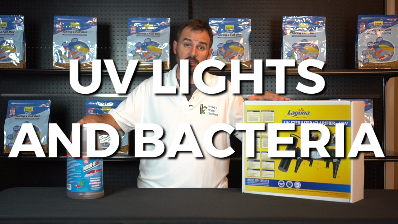 UV Lights and Bacteria