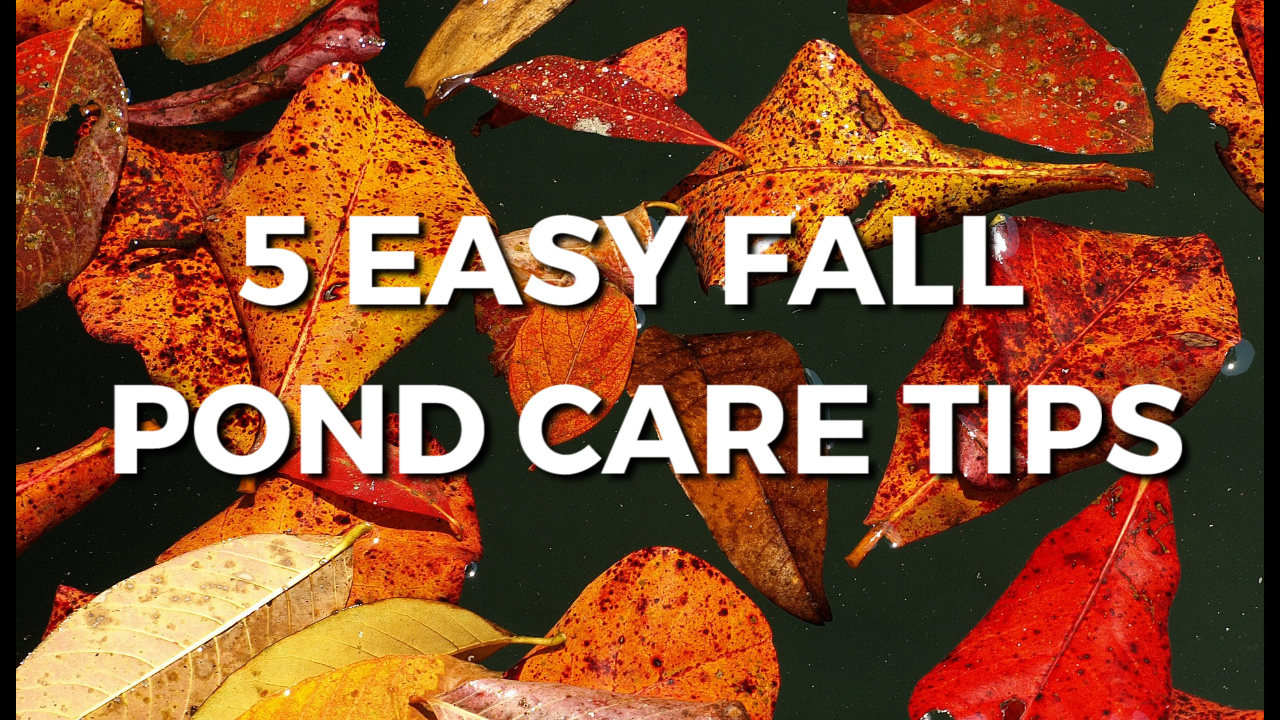 5 Easy Tips For Fall Pond Care