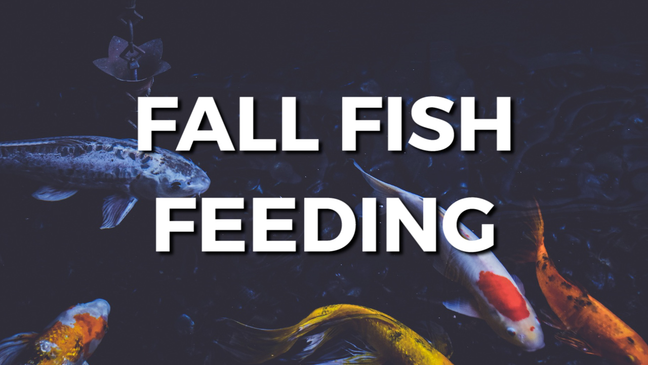 Fall Fish Feeding