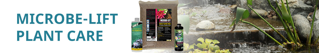 Cat ML Plant Care