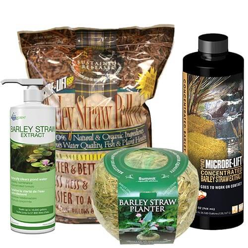 Barley Products
