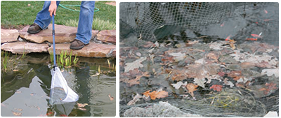 winterizing your pond